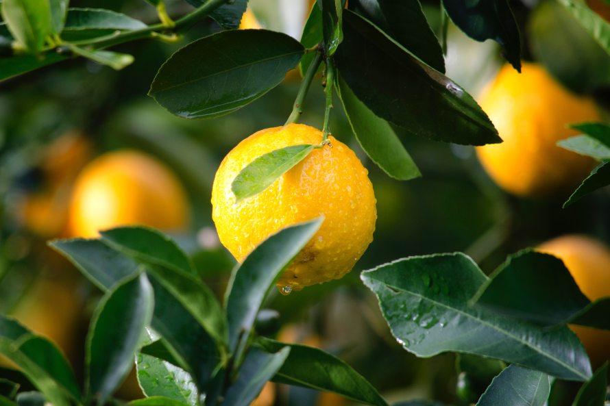 citrus-close-up-crop-129574